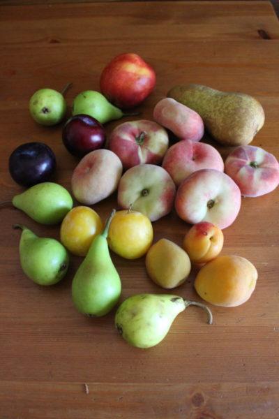 イタリアの夏のフルーツ