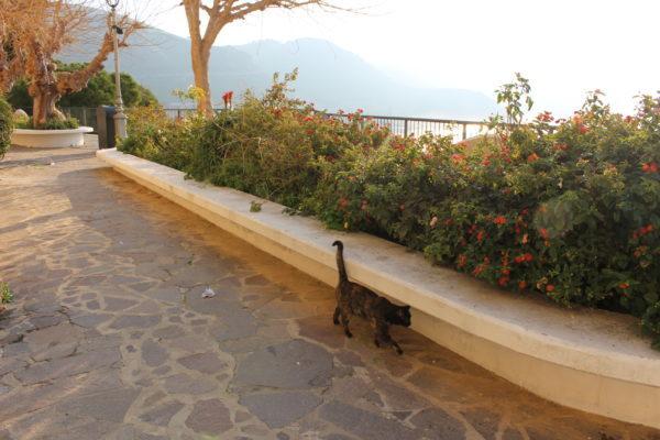 スペルロンガの猫と展望台